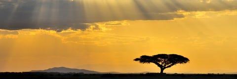 африканский заход солнца панорамы Стоковое Изображение RF