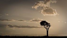 Африканский заход солнца с одиночным деревом Maasai Mara, Кения стоковое фото rf