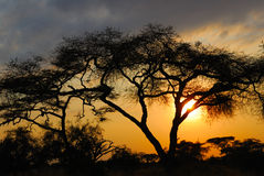 африканский заход солнца Стоковые Изображения RF