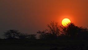 Африканский заход солнца в matusadona Стоковые Изображения RF
