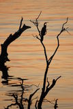 Африканский заход солнца над Chobe Стоковое Фото