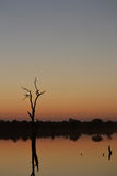 Африканский заход солнца реки Стоковое Фото