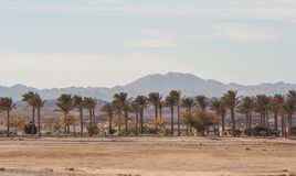 Африканский ландшафт на солнечный день дорога асфальта идя среди ладоней и кустов с цветками Стоковые Изображения RF