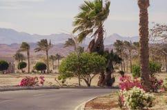 Африканский ландшафт на солнечный день дорога асфальта идя среди ладоней и кустов с цветками Стоковое фото RF