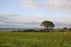 африканский ландшафт стоковое изображение rf