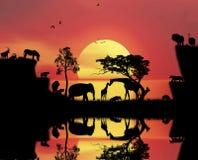 Африканский момент взгляда ландшафта захода солнца Стоковая Фотография RF
