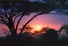 африканский пунцовый восход солнца Стоковая Фотография RF