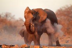 Африканский слон предусматриванный в пыли Стоковая Фотография RF