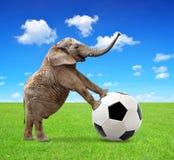 Африканский слон с футбольным мячом Стоковые Фото
