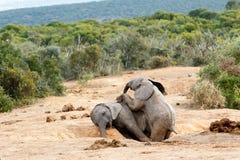 африканский слон bush Стоковые Фотографии RF