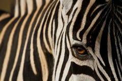 Африканский дух стоковые фотографии rf