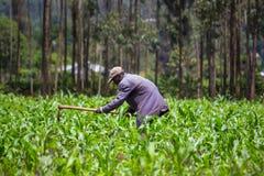Африканский weeding фермера стоковая фотография rf