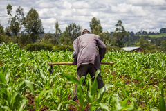 Африканский weeding фермера стоковые изображения rf