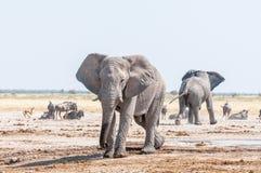 2 африканских слона, голубой антилопа гну и прыгун на waterh Стоковое Изображение RF