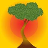 Африканское дерево на предпосылке захода солнца Стоковое Изображение RF