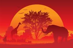 африканское сафари Стоковое Изображение