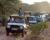 африканское сафари Стоковая Фотография RF