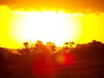 африканское солнце Стоковое Изображение RF