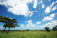 африканское tarangire национального парка ландшафта Стоковое фото RF