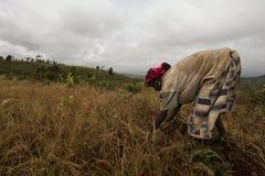 Африка, южная Эфиопия, деревня Konso. unidentify женщина Konso работая на поле Стоковая Фотография