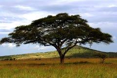 Африка Стоковое Изображение RF