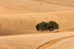 Африка fields южная пшеница Стоковая Фотография