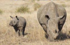 Африки младенца носорога белизна на юг стоковые изображения