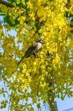ая ветвь птицы Стоковые Фотографии RF