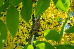 ая ветвь птицы Стоковые Изображения RF