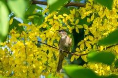 ая ветвь птицы Стоковое Фото