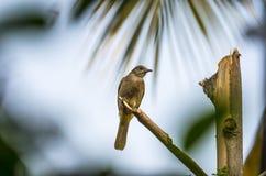 ая ветвь птицы Стоковое Изображение