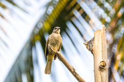 ая ветвь птицы Стоковое Изображение RF