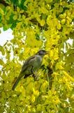 ая ветвь птицы Стоковое фото RF
