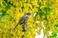 ая ветвь птицы Стоковые Изображения