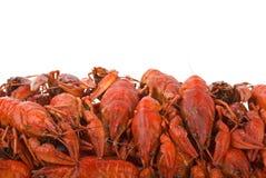 ая куча crayfishes Стоковые Фото