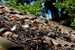 Ая черепицей крыша Стоковая Фотография RF
