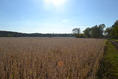 Адам-ondi-Ahman Daviess County Миссури Стоковое Фото