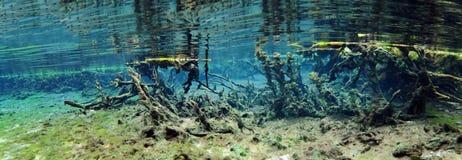 Александр скачет подводное панорамное Стоковые Фотографии RF