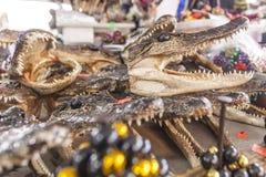 Аллигатор возглавляет для продажи в Новом Орлеане, Луизиане стоковое изображение rf