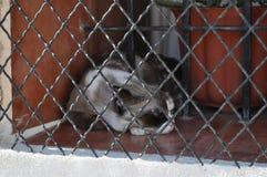 Аликанте Испания Кот имея остатки за барами Стоковое фото RF