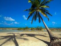 ладони иллюстрации конструкции кокоса предпосылки белые Стоковая Фотография