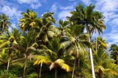 ладони иллюстрации конструкции кокоса предпосылки белые Стоковые Фото