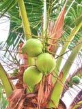 ладони иллюстрации конструкции кокоса предпосылки белые Стоковое Изображение RF
