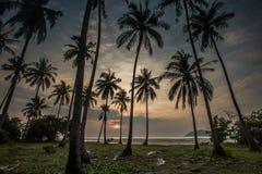 ладони кокоса пляжа зашкурят тропик захода солнца Стоковые Изображения