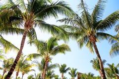 ладони тропические Стоковое Фото