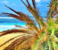 ладонь тропическая Стоковая Фотография