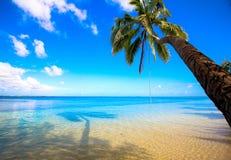 ладонь тропическая Стоковое Фото