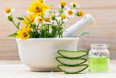 Алоэ vera альтернативного здравоохранения свежее травяное, масло и одичалый fl Стоковые Изображения RF