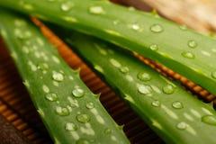 Листья vera алоэ Стоковые Фотографии RF