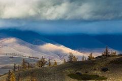 Алтай Горы Золотистая осень голубое небо Стоковое Изображение RF